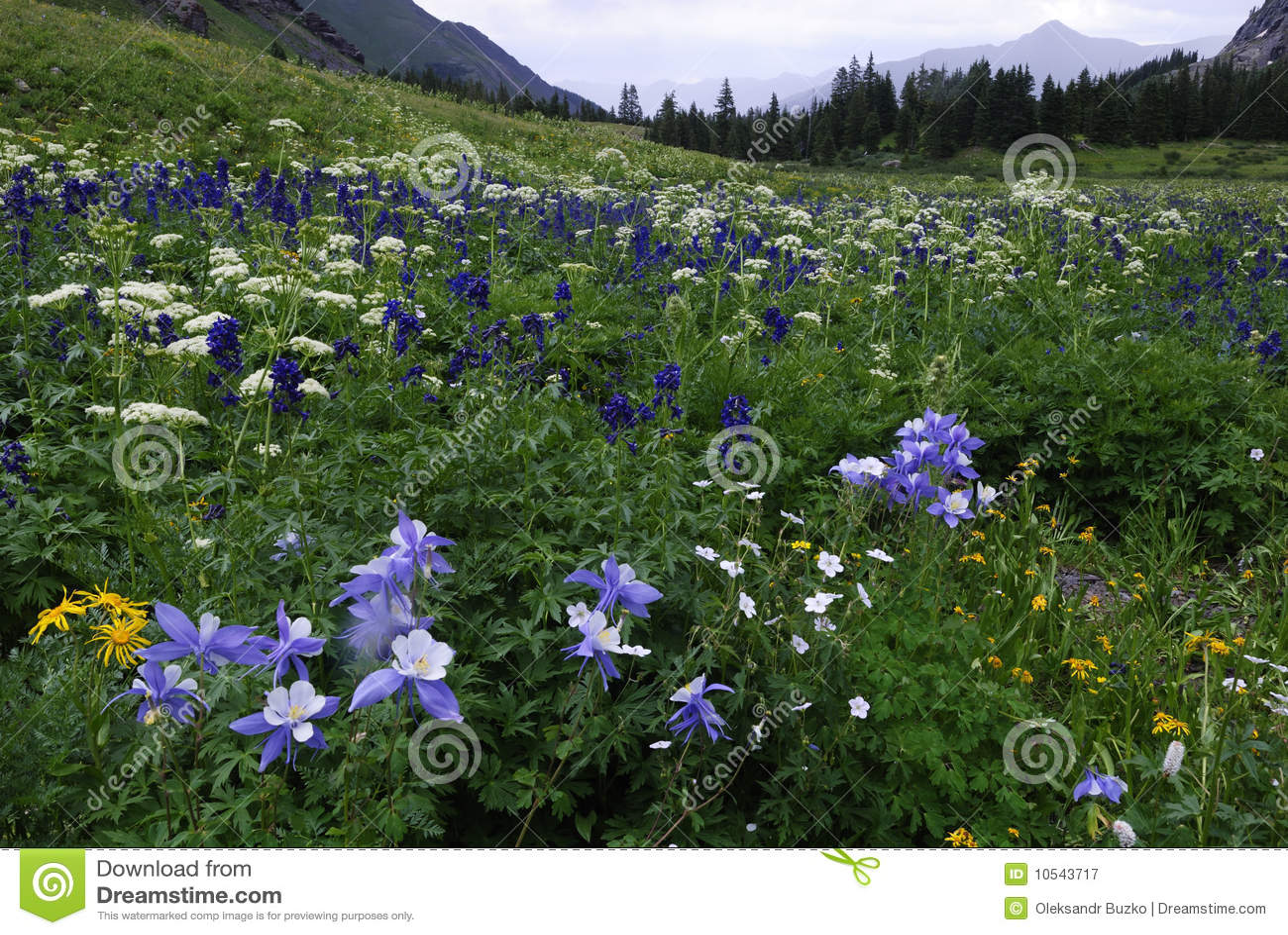 Wildflowers in San Juan Mountains in Colorado