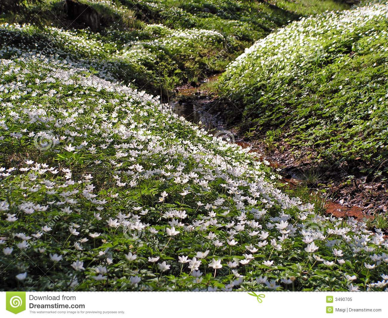 Wildflowers on slopes