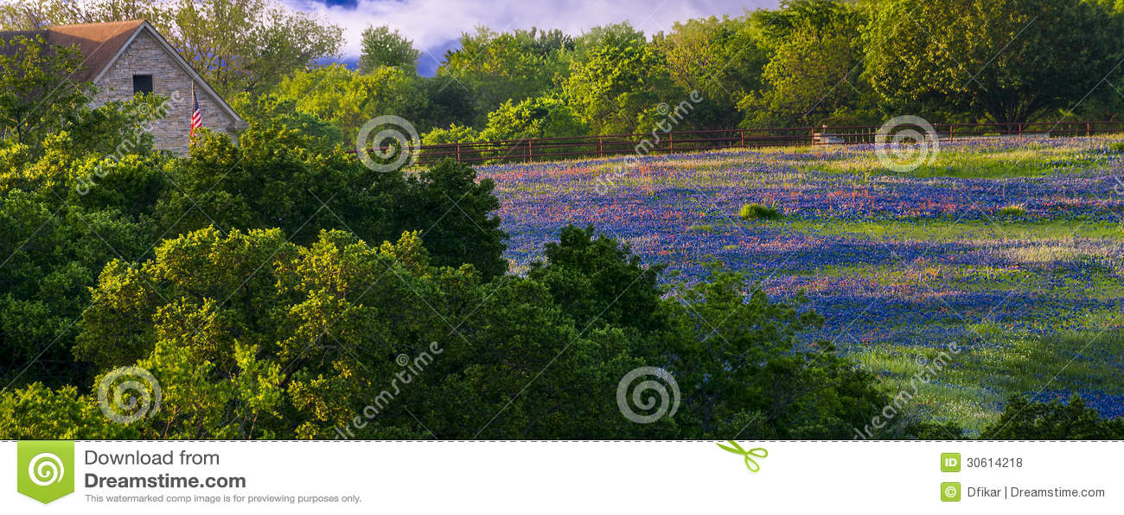 Wildflowers on Sugar Ridge Road