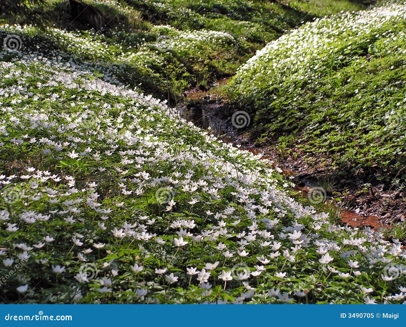 Wildflowers sui pendii