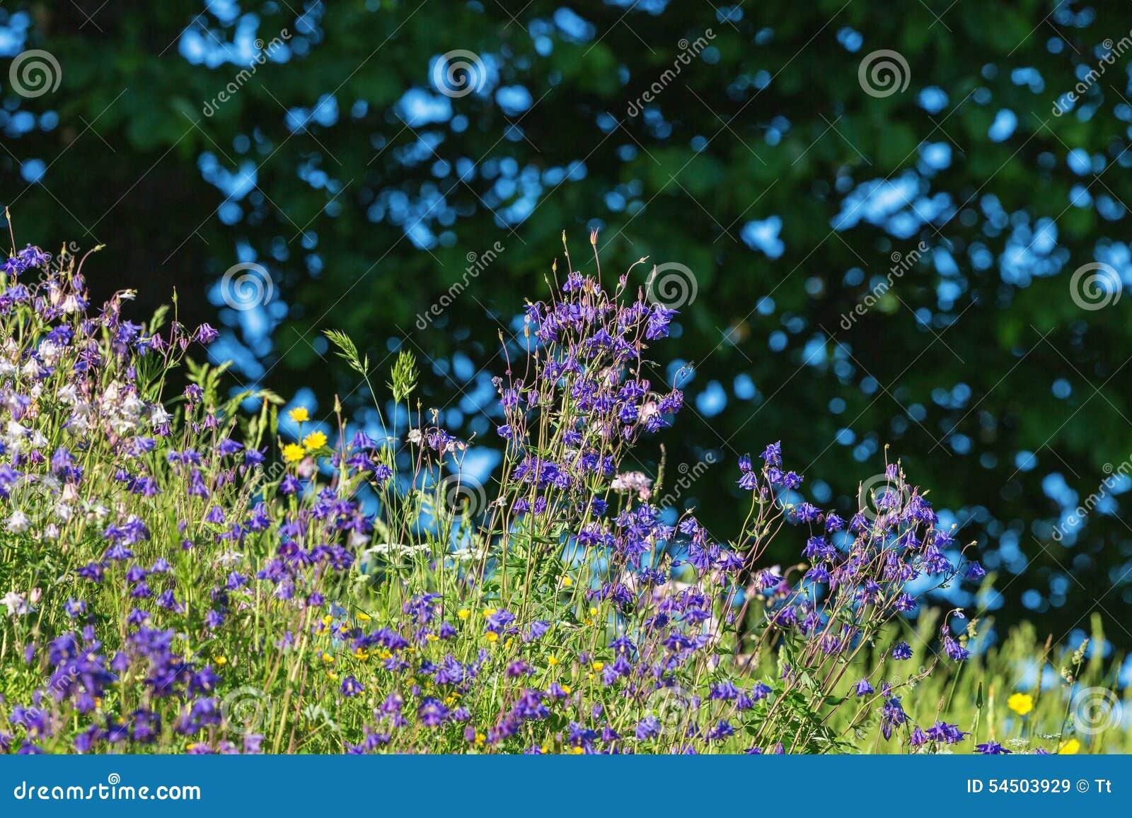 Wildflowers sur un pré d été