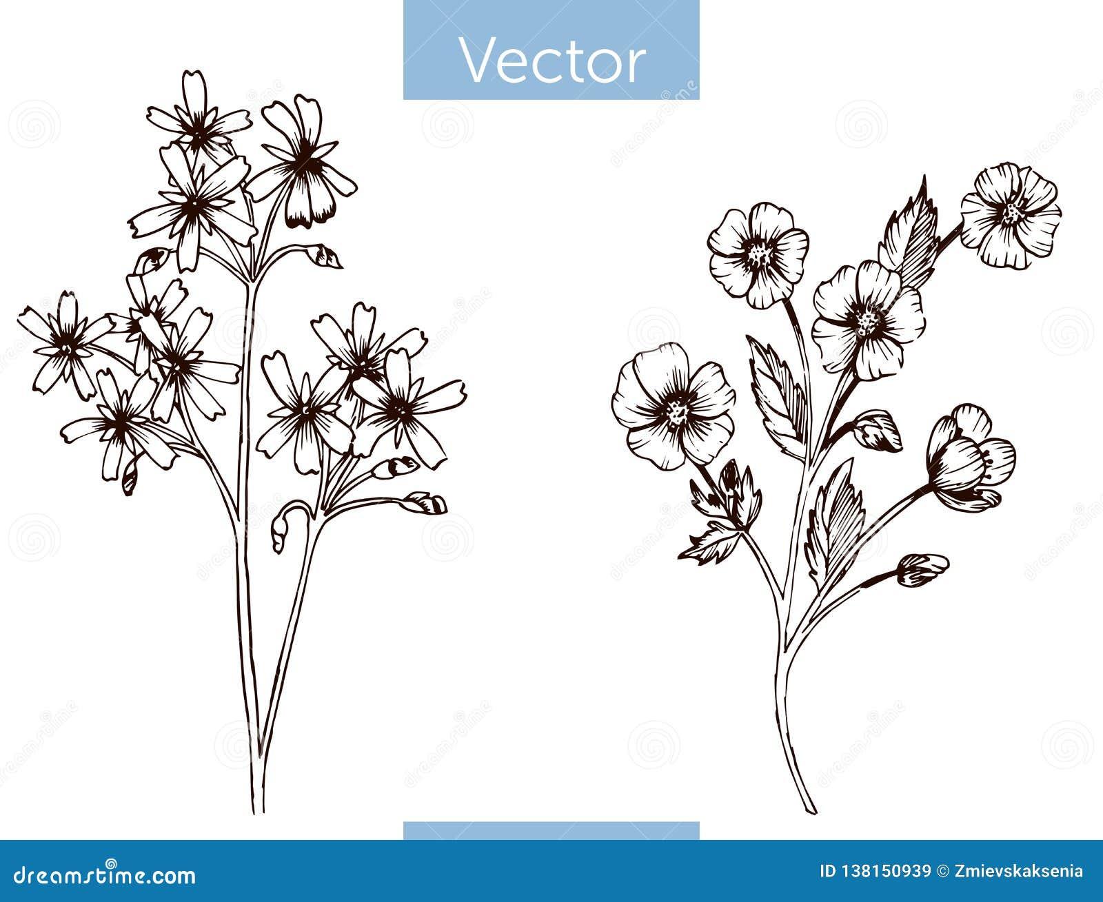 Wildflowers tirados do vetor mão monocromática no fundo branco