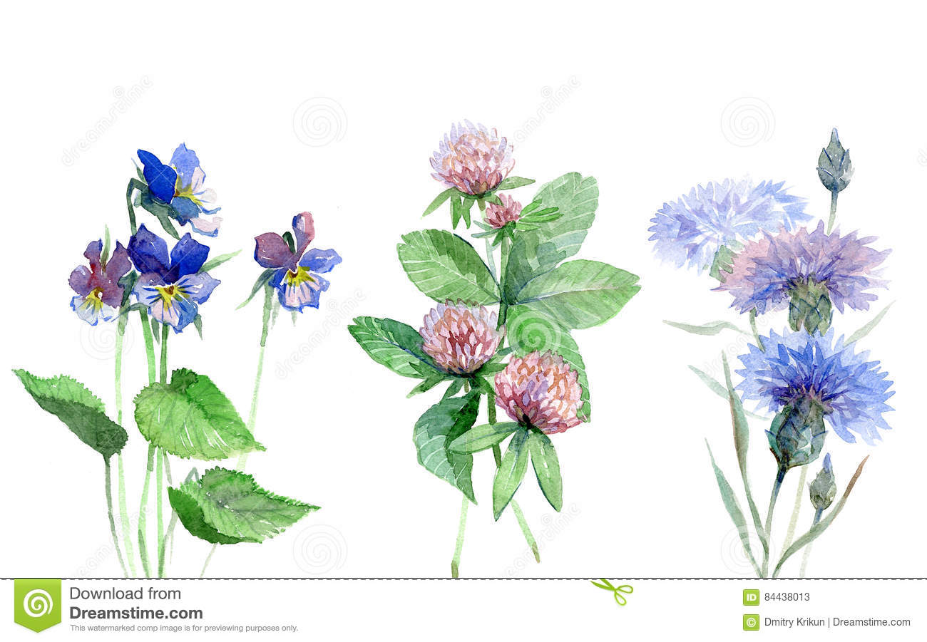 Wildflowers watercolor set with violet, clover, cornflower.