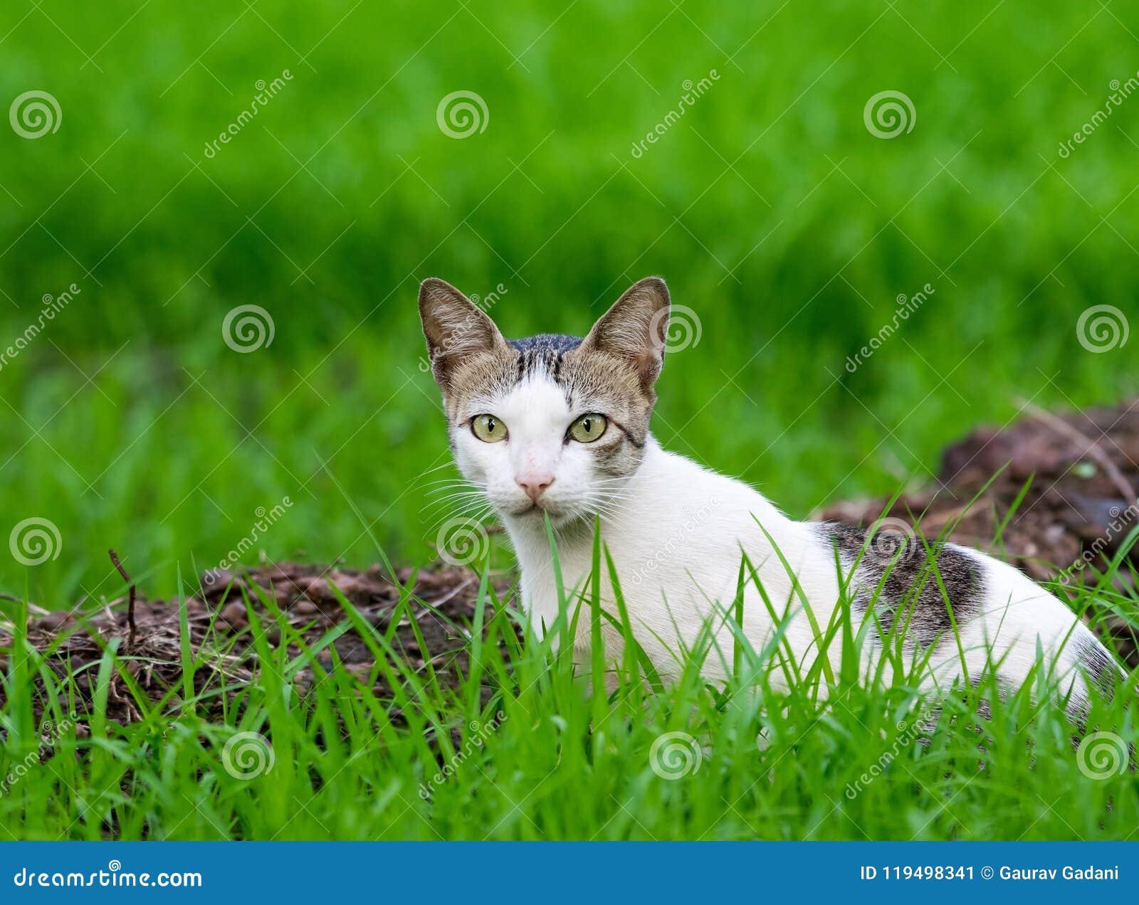 Wildkatze in Gras durchgesetzter Forderung