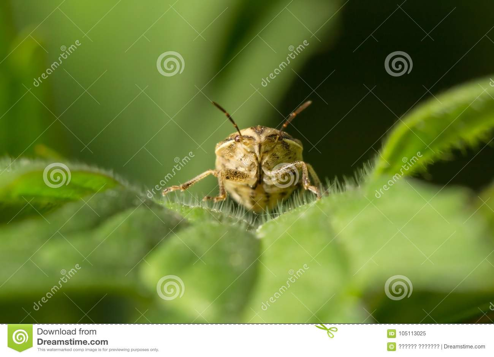 Wildlife μακρόκοσμος όμορφα έντομα Ζωύφια, αράχνες, πεταλούδες και άλλα όμορφα έντομα