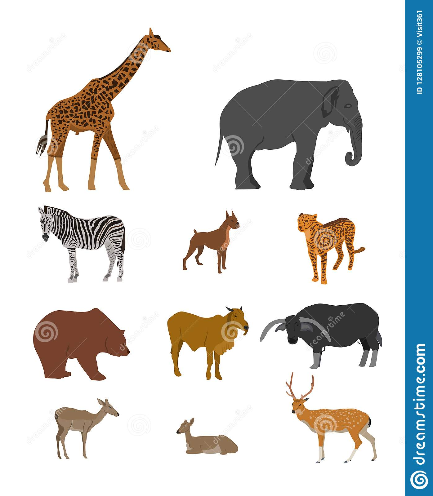 Wildlife Animal collection on white background