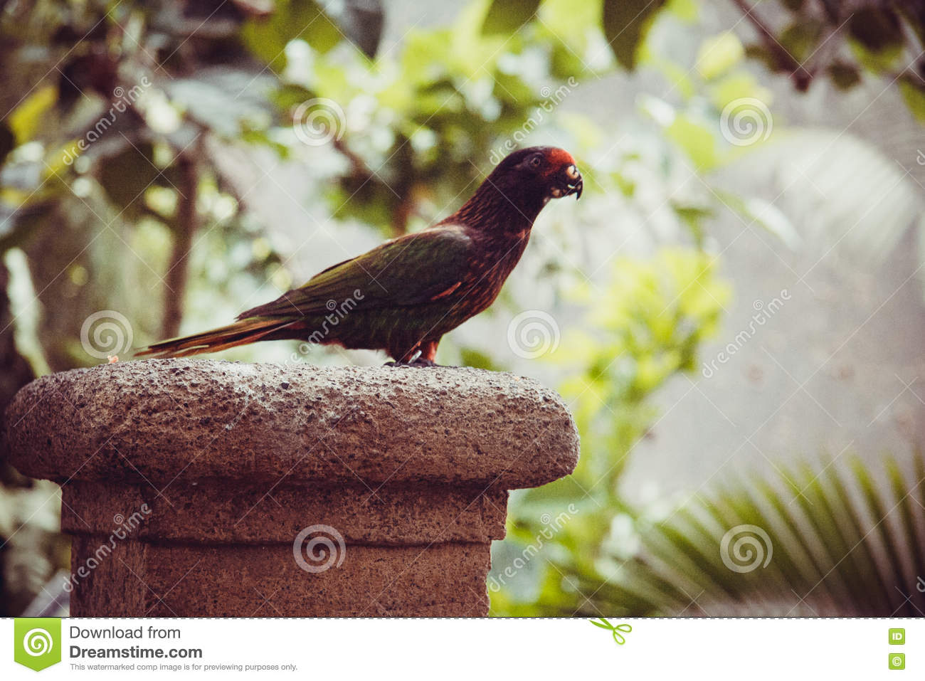 Wildlife In Bali Birds And Reptiles Park Stock Photo Image Of