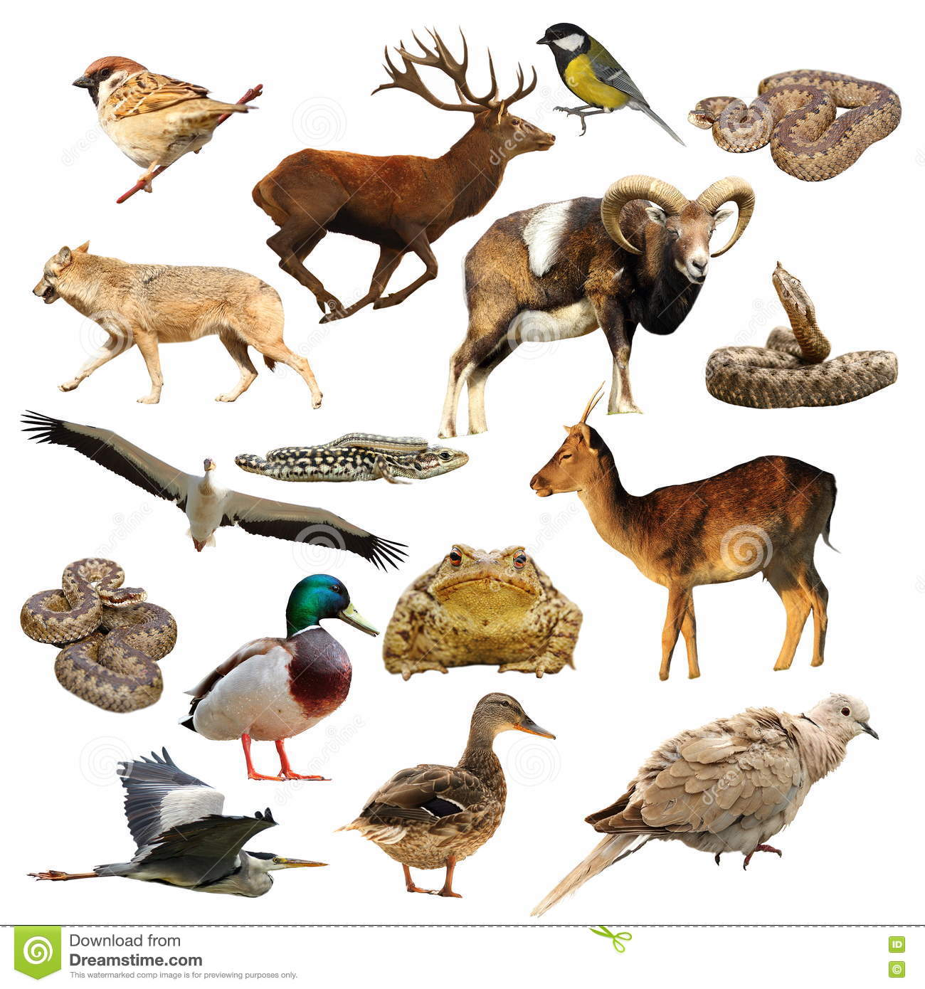 Wildlife collection over white