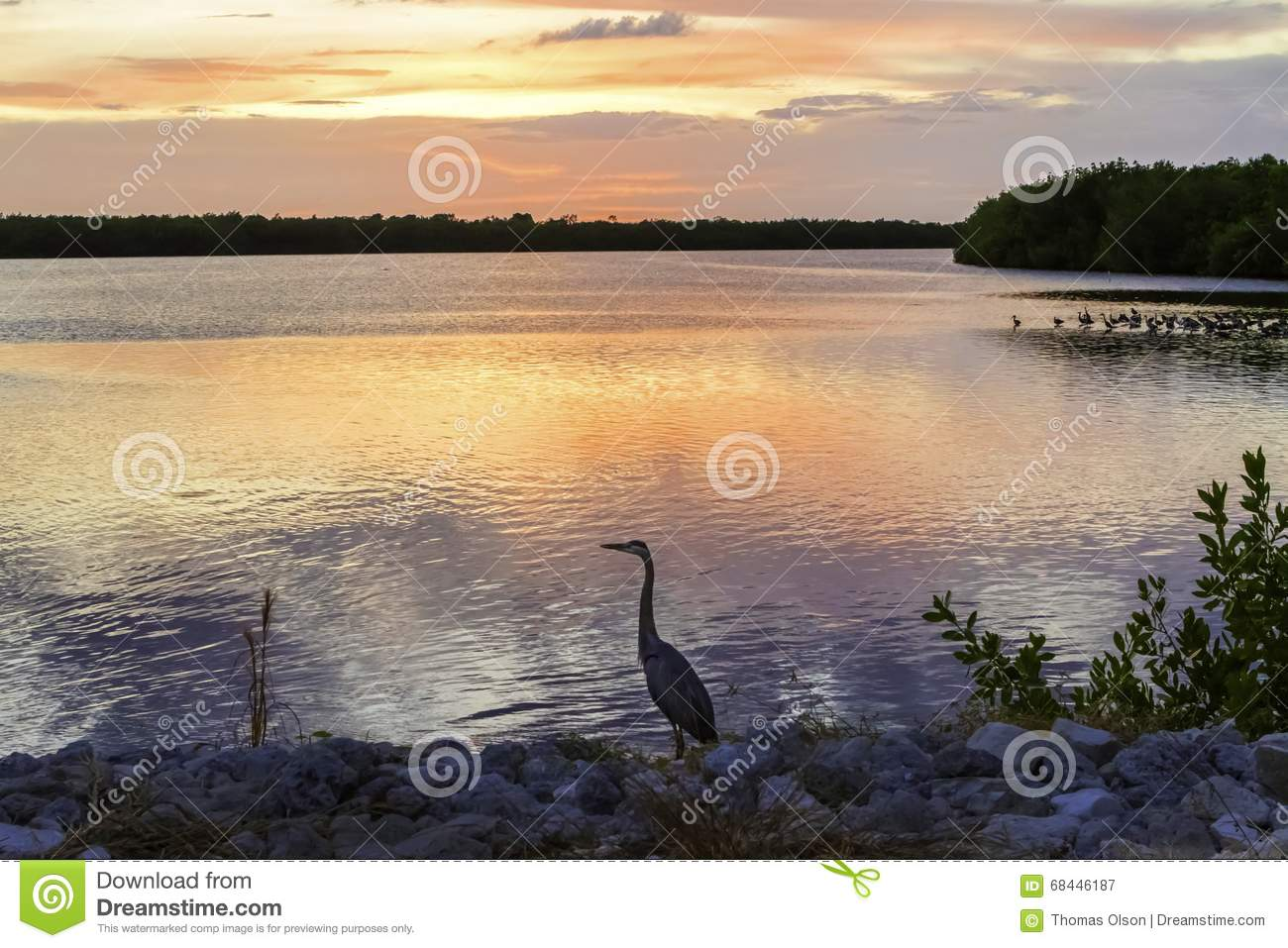 Wildlife Sunset with Blue Heron