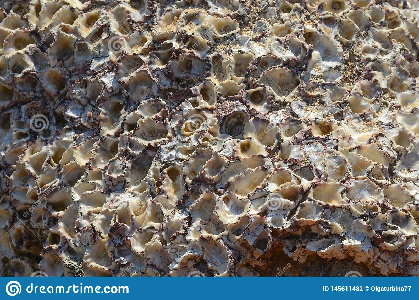 Wildlife  texture. Fossilized Shells in a Stone Reef