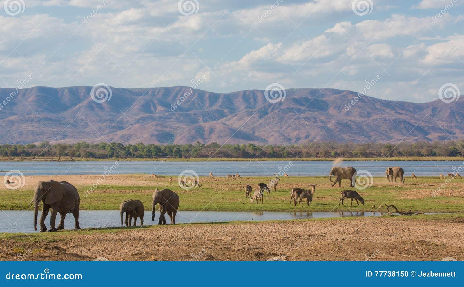 Wildlife on the Zambezi river