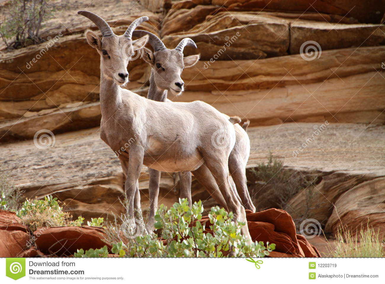 Wildlife In Zion Royalty Free Stock Images Image 12203719