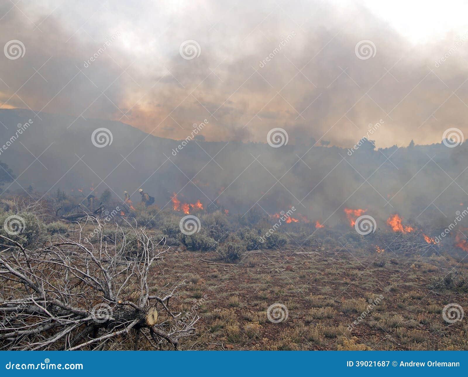Wildnis-Feuer