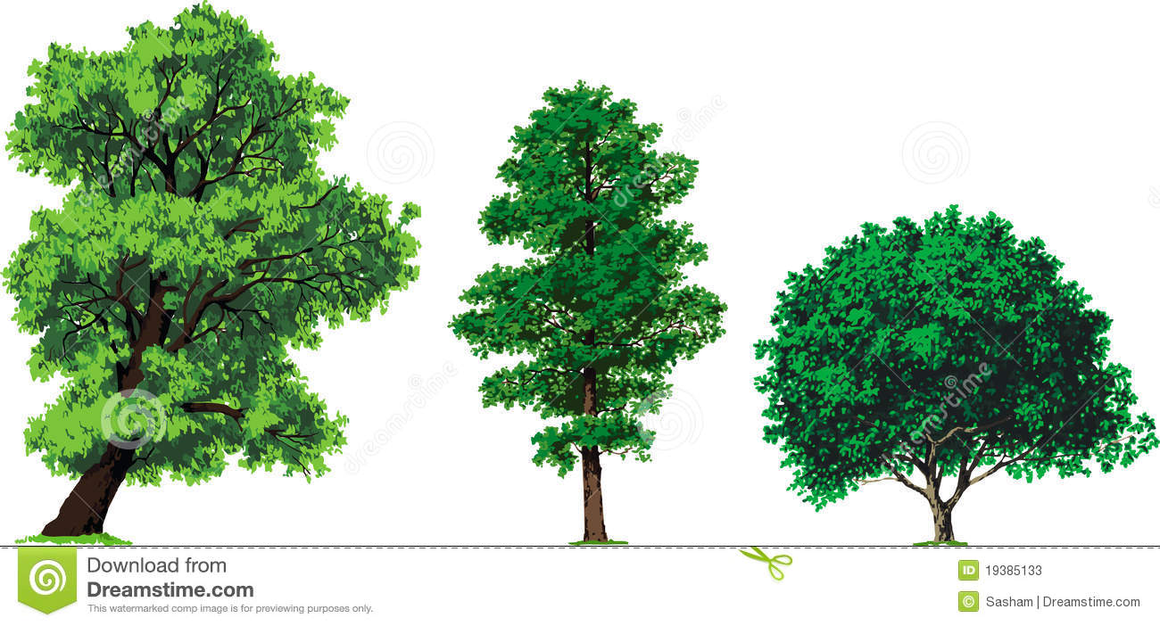 Willow, Alder And Walnut Trees. Vector Stock Photos - Image: 19385133