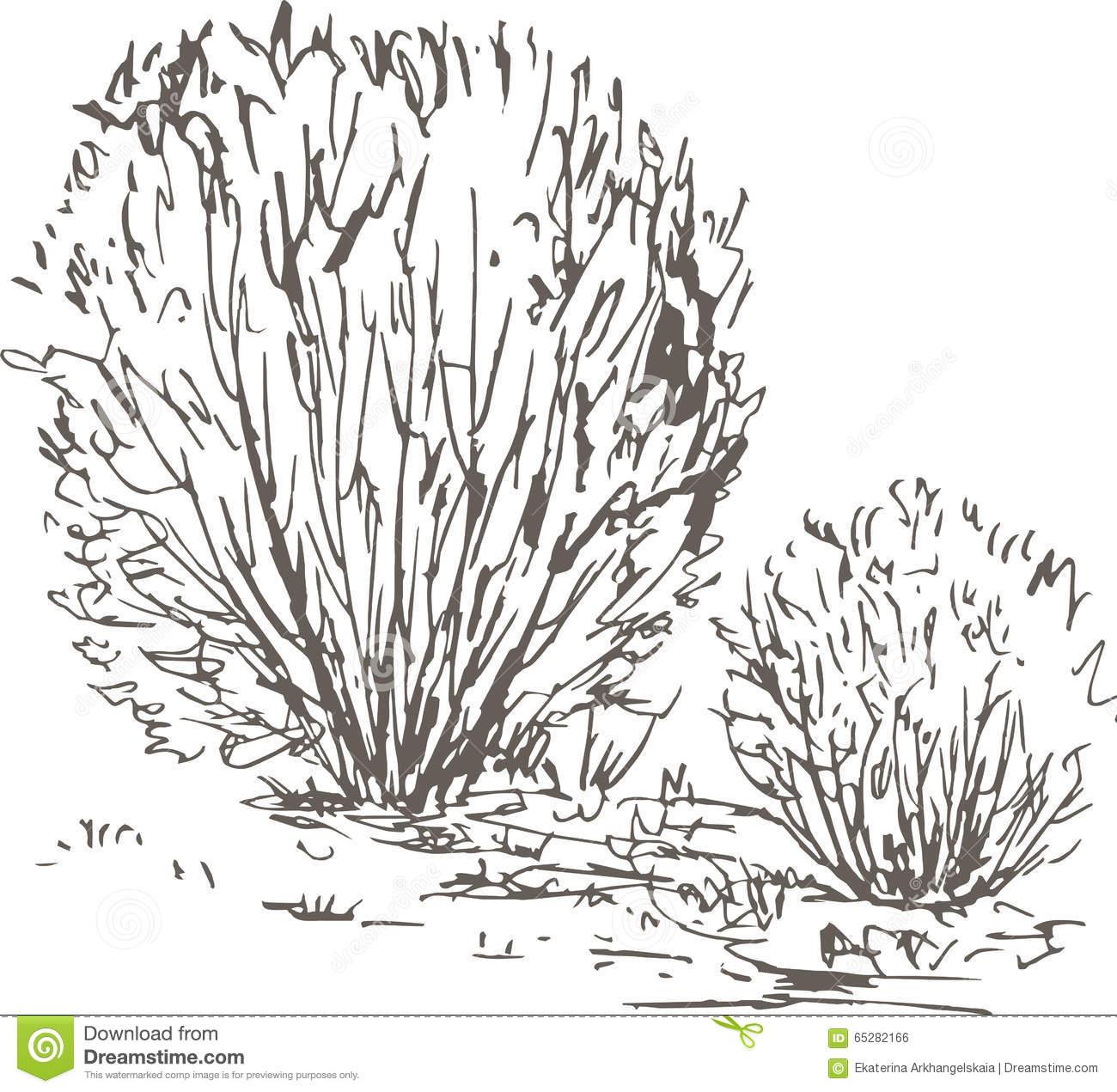 Willow Bushes With Leaves And Grass Stock Vector ...