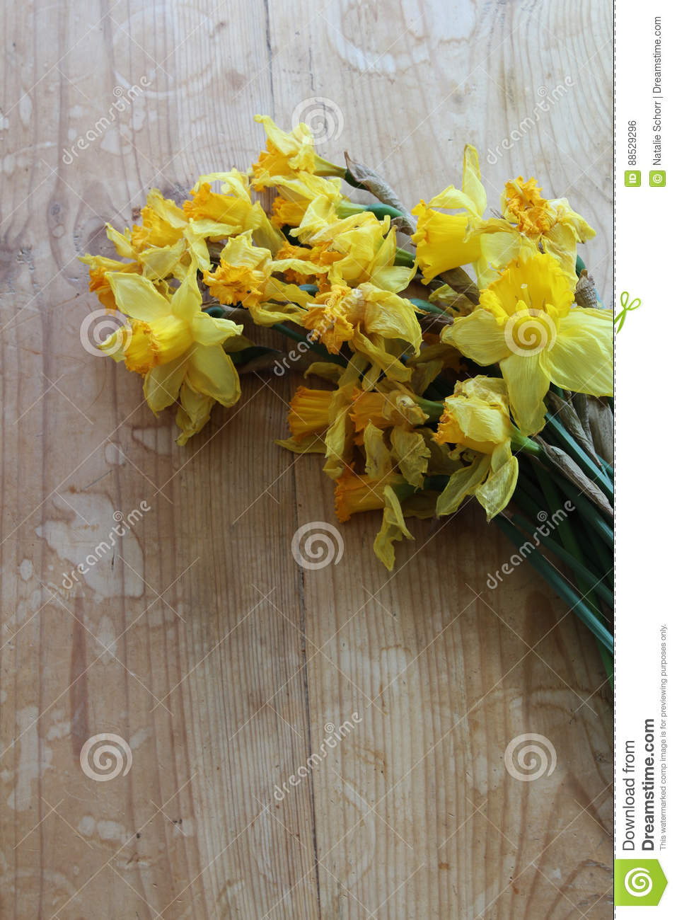 Wilted daffodil flowers on a wooden table stock photo image of royalty free stock photo izmirmasajfo Images