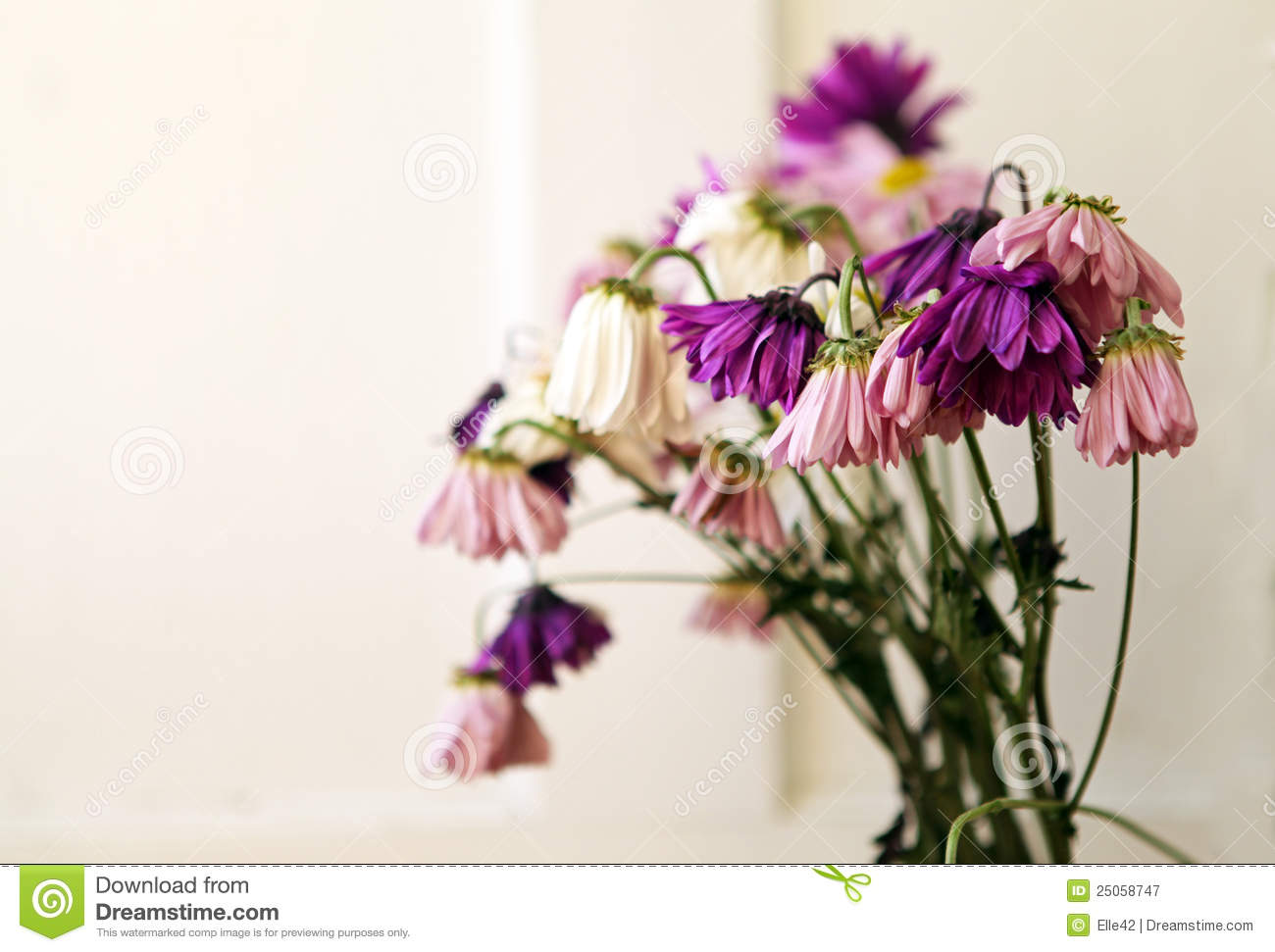 Wilted Flowers Royalty Free Stock Photography Image