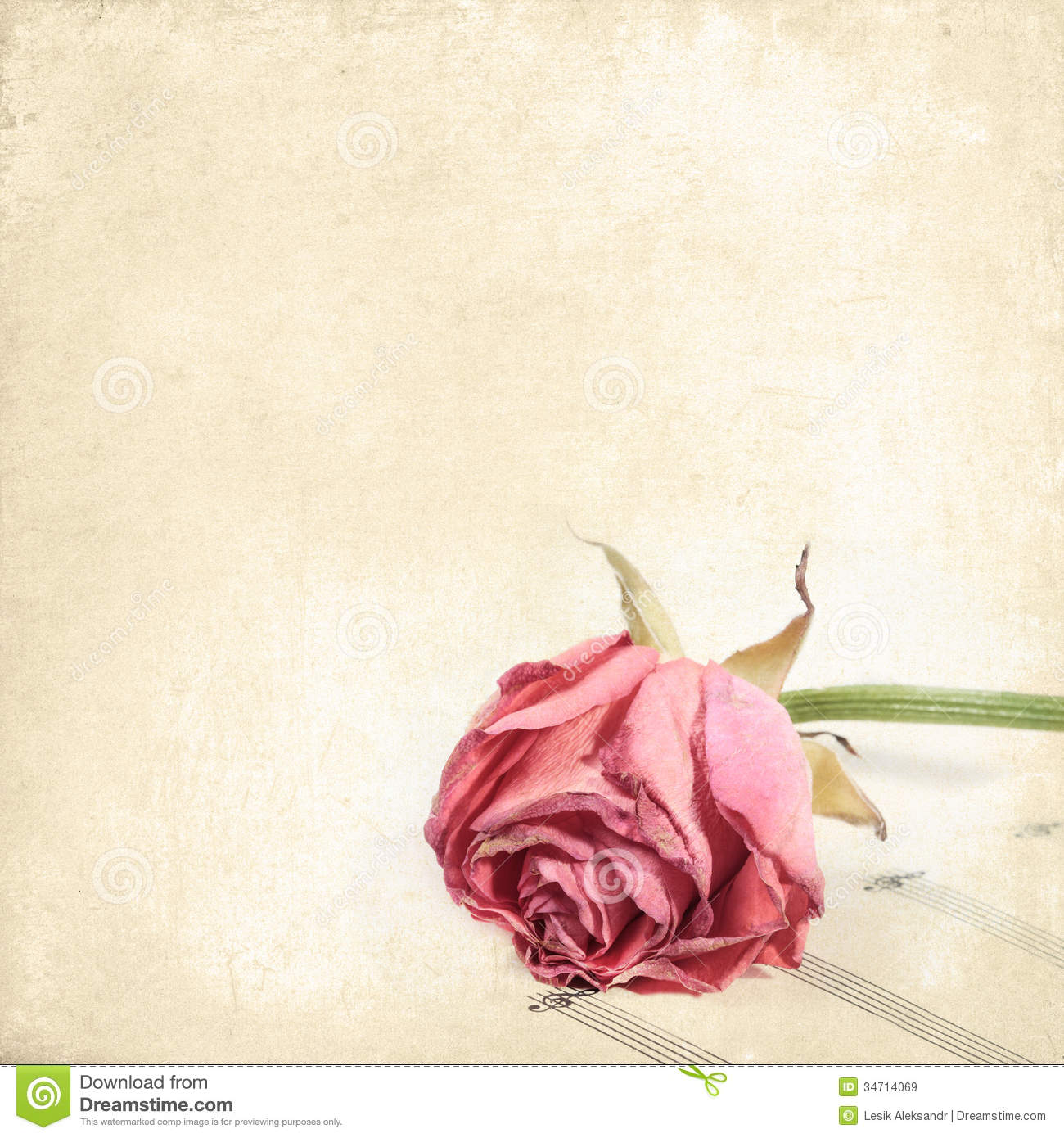 wilted rose flower on the music paper  vintage floral background royalty free stock images