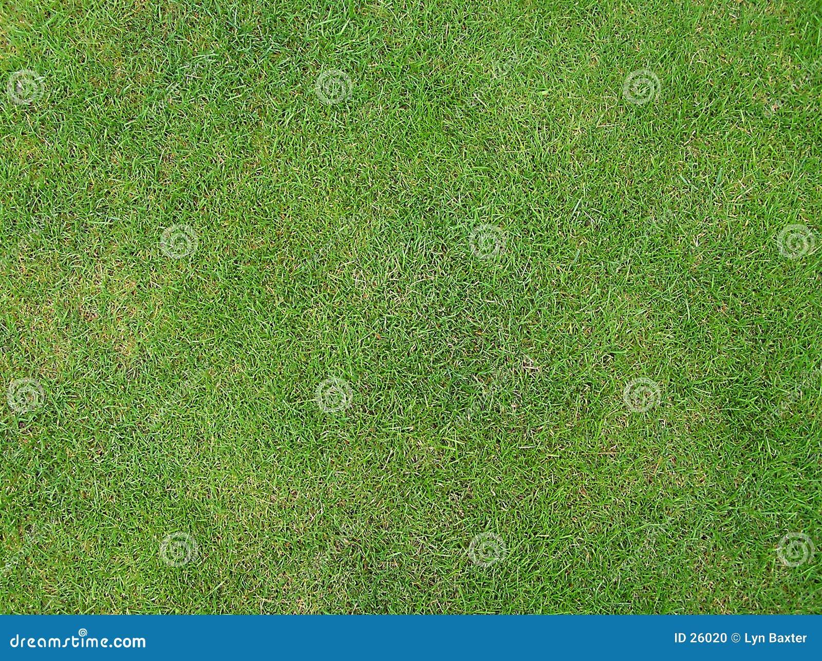 Wimbledons Gras