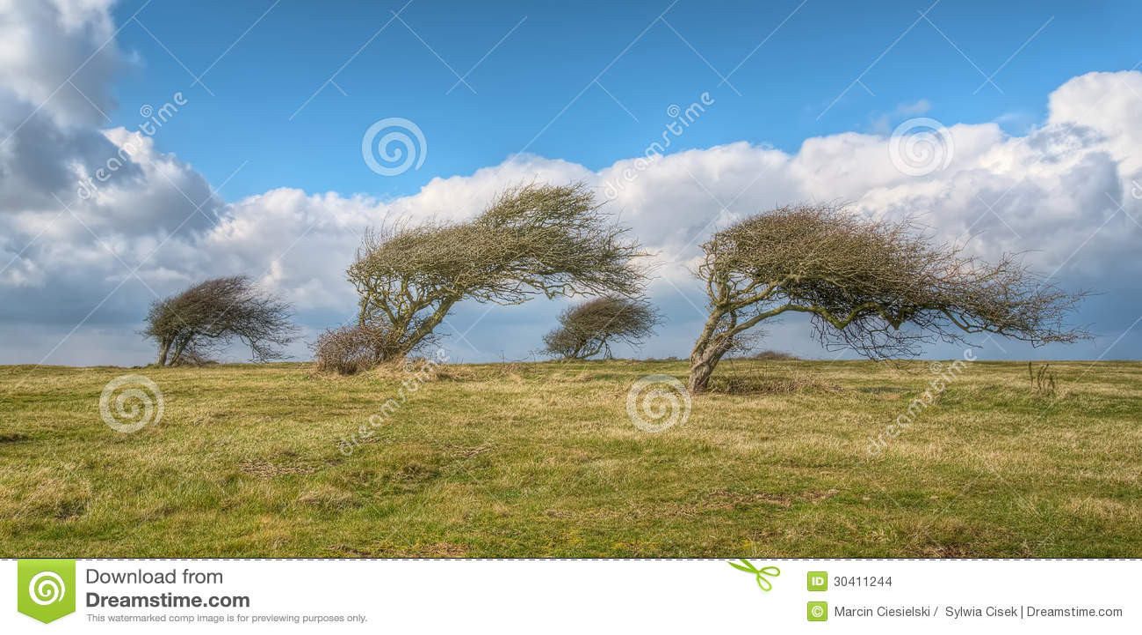 Wind blown trees