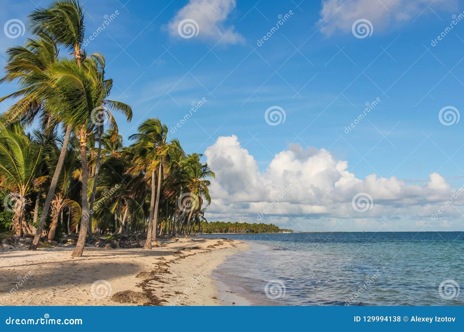 Wind en palmen op het strand van Catalonië Bavaro in de Dominicaanse Republiek
