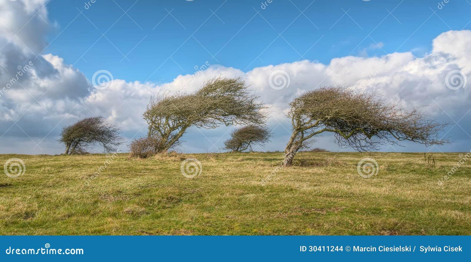 Wind geblazen bomen