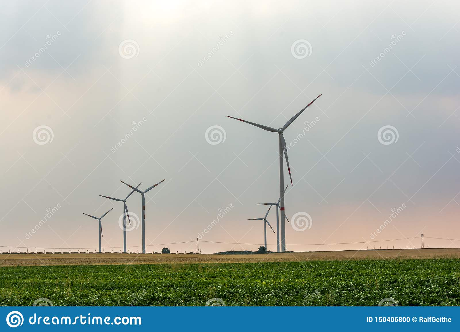 Wind farm on a field in the evening sun