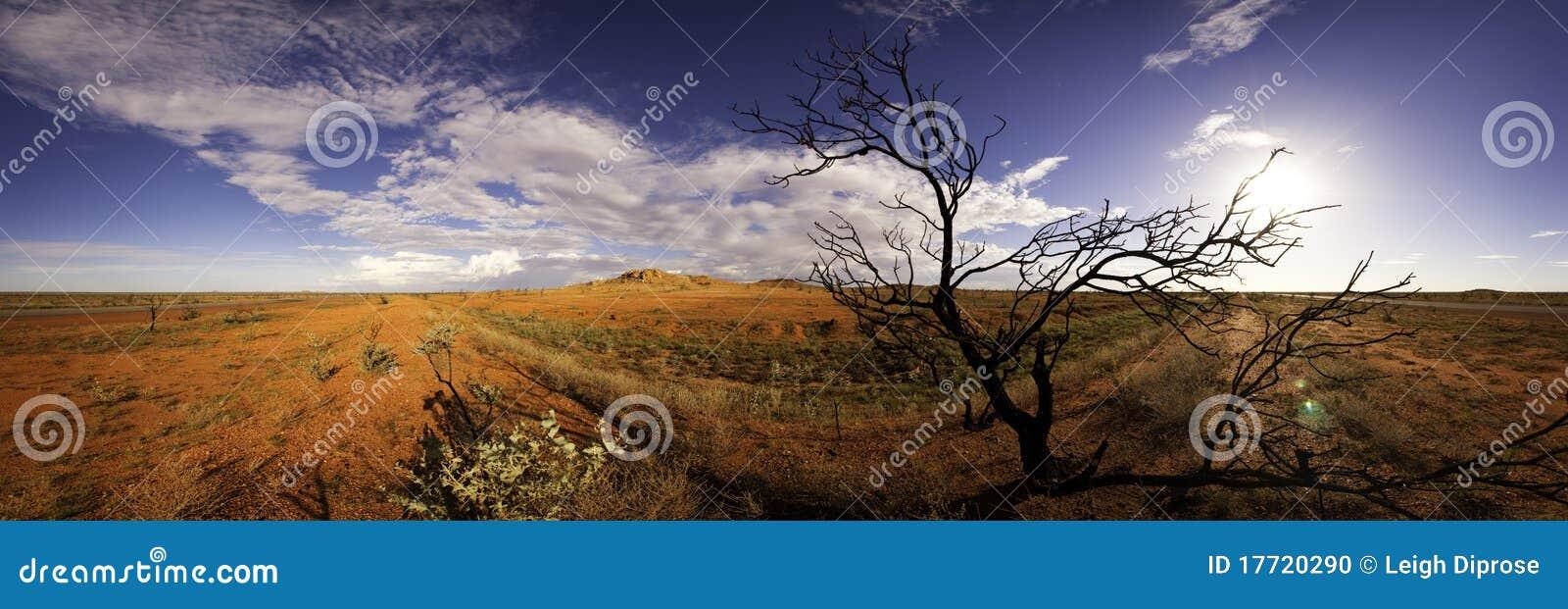 Windblown panoramatree