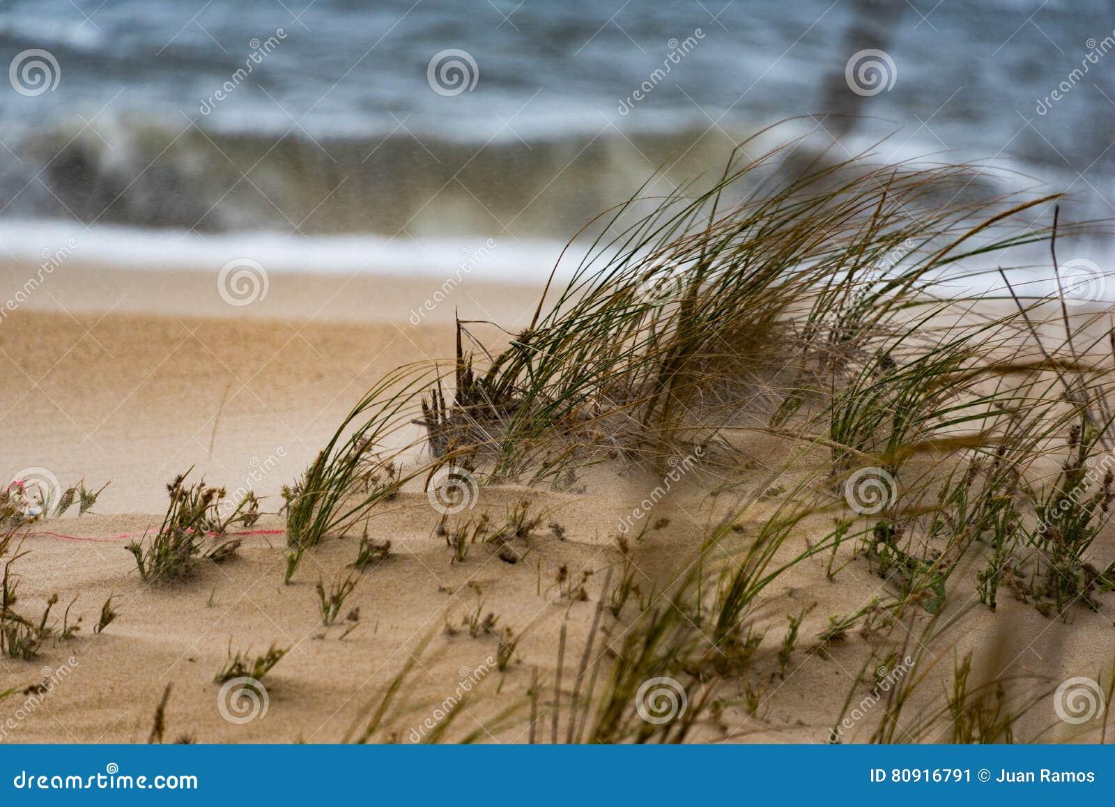 Winden die over gras op strand blazen