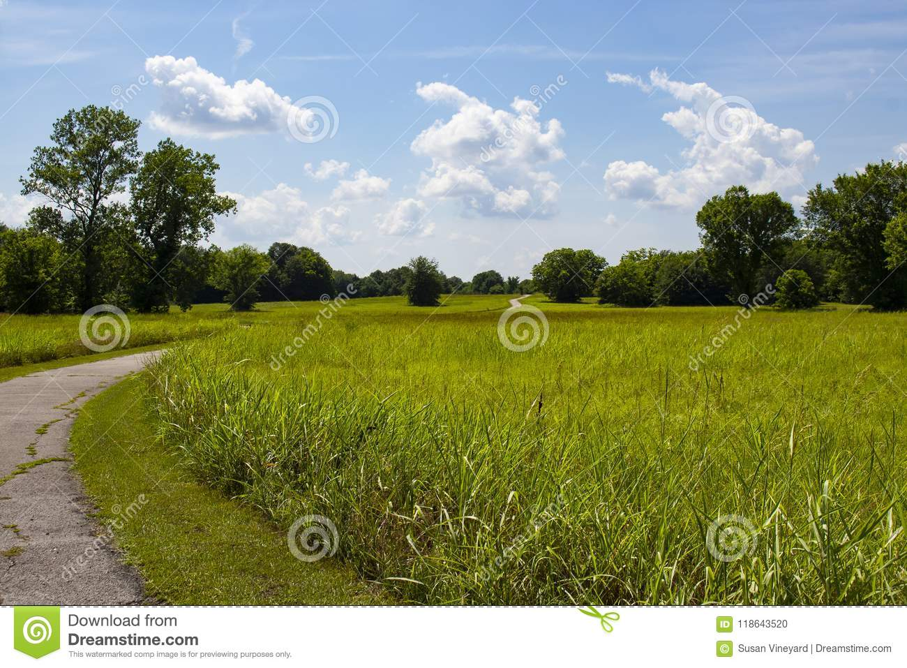 Winding path curves through meadow of grass and by green trees and up over hill all under beautiful blue sky and fluffy clouds