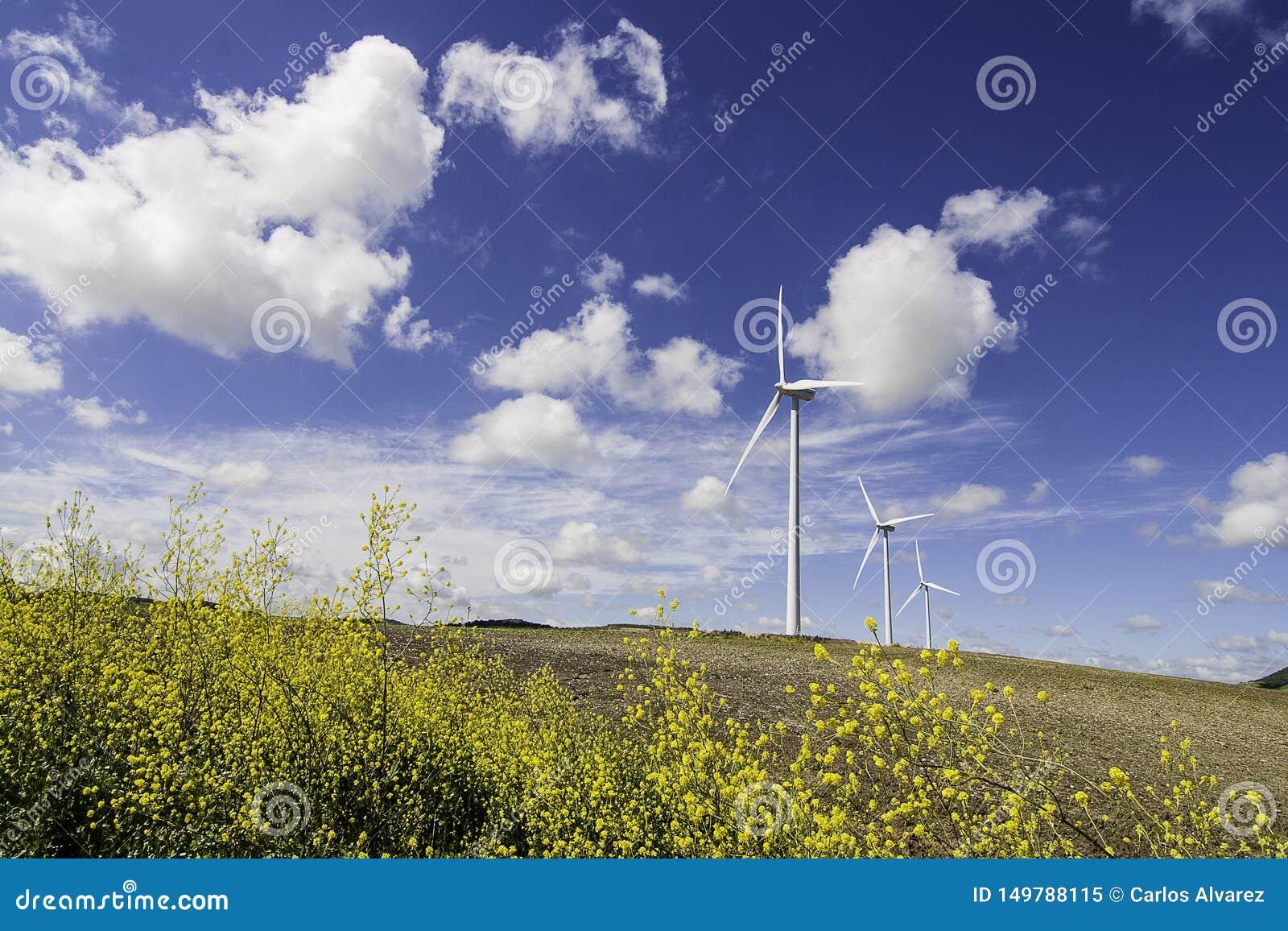 Windmühlen mit gelben Blumen