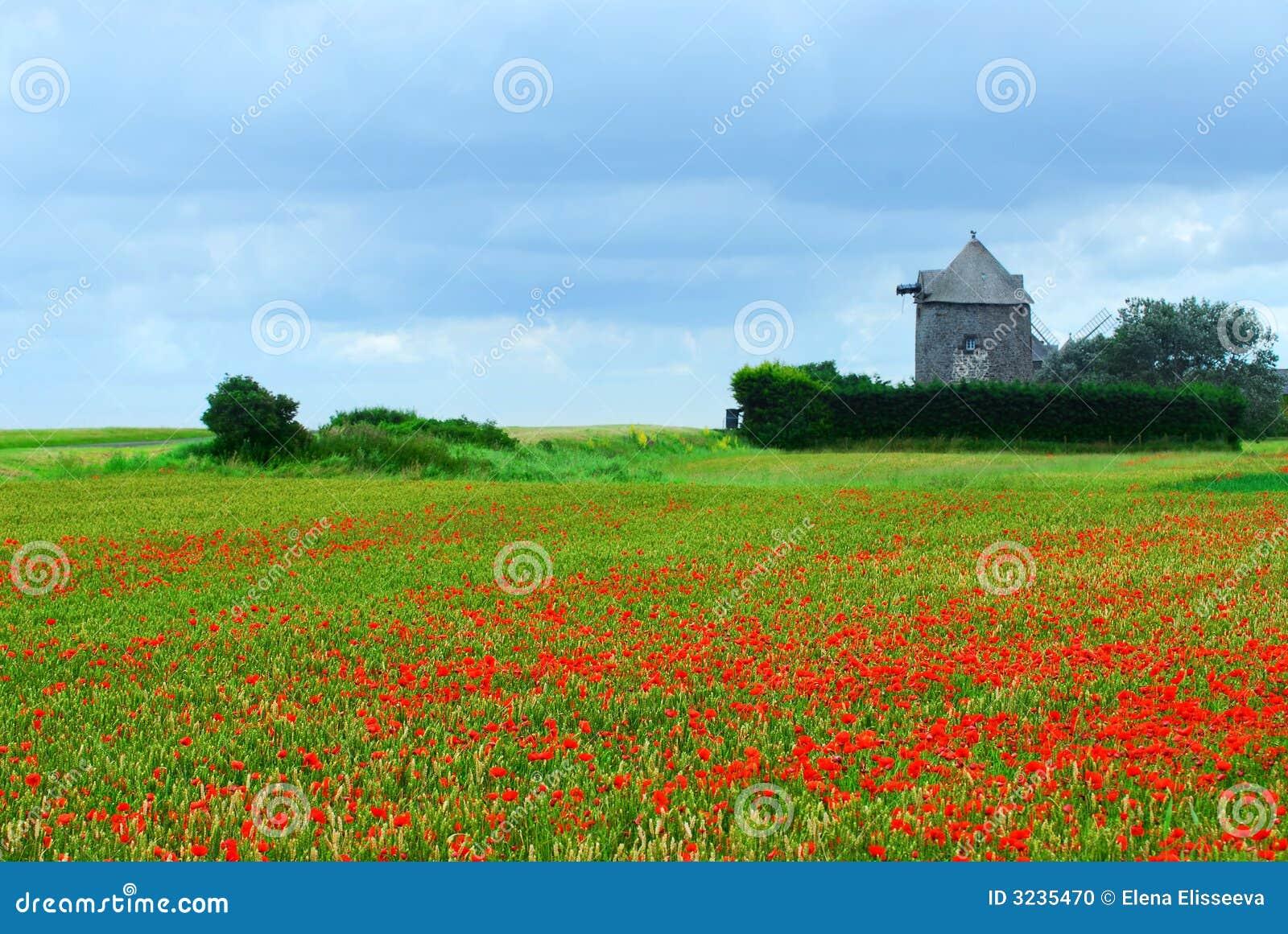 Windmill and poppy field