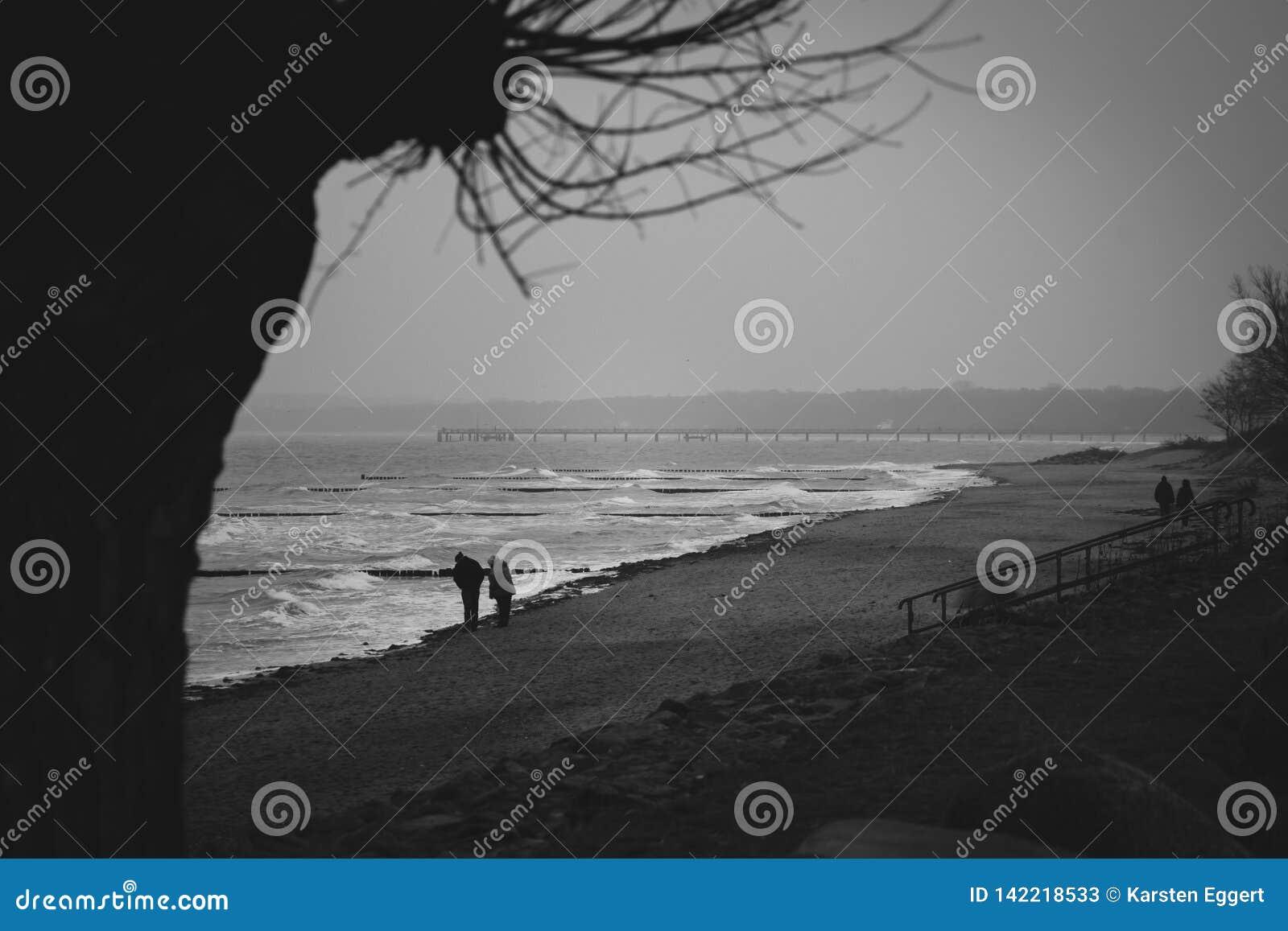 Windmolen, cultuur, hemel, Holland, Nederland, de lente, aard, reis, het Nederlands, landschap, platteland, traditionele molen, l