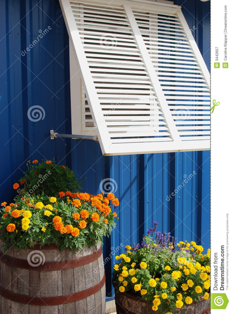 Window shutter and flowers