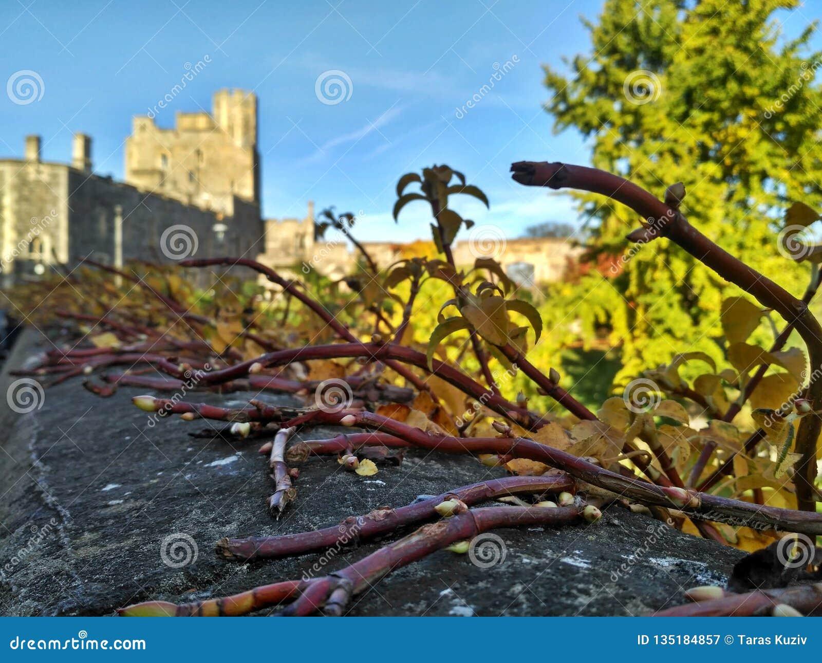 Windsor/Gran Bretaña - 2 de noviembre de 2016: Paredes, edificios y torres de Windsor Castle en un día soleado