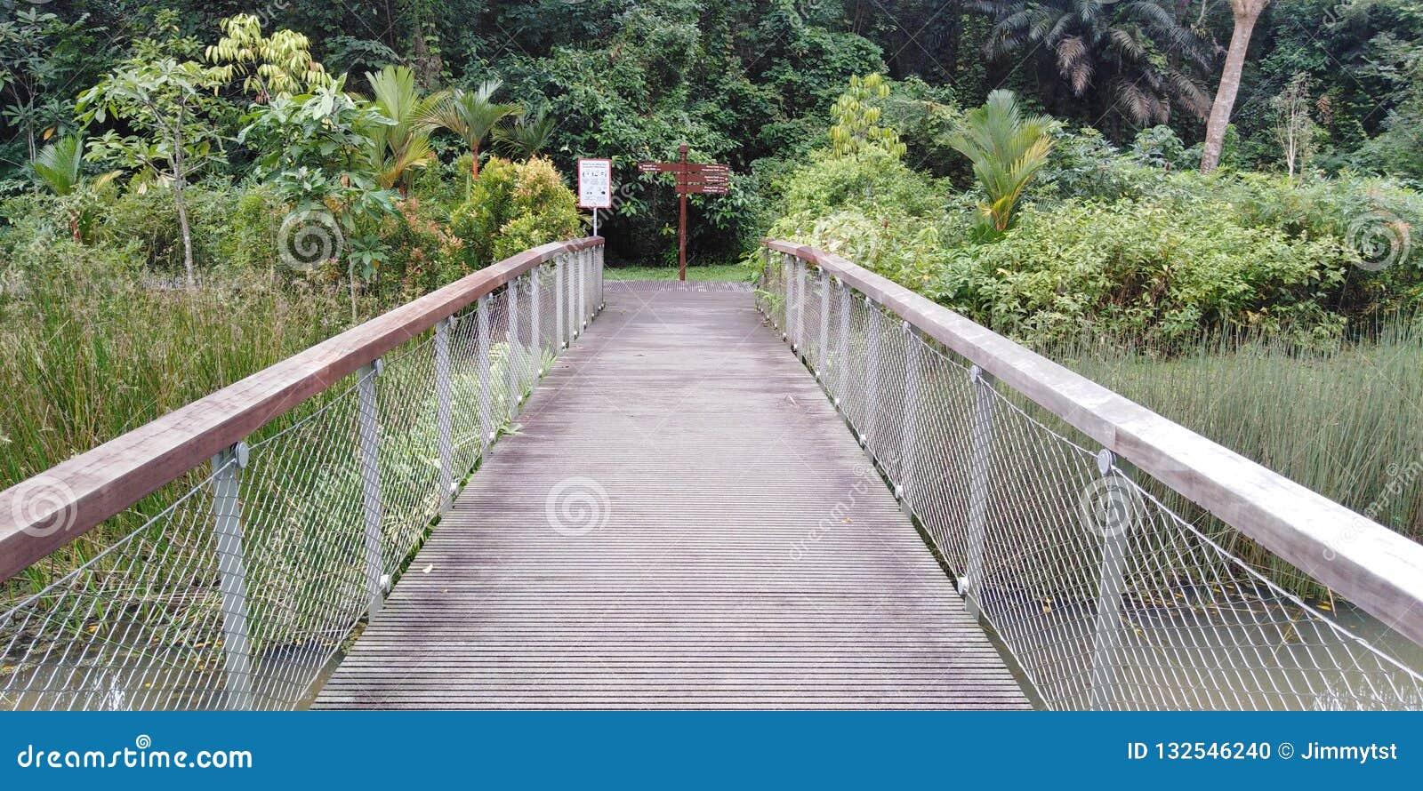 Windsor nature park stock photo. Image of river, bridge ...