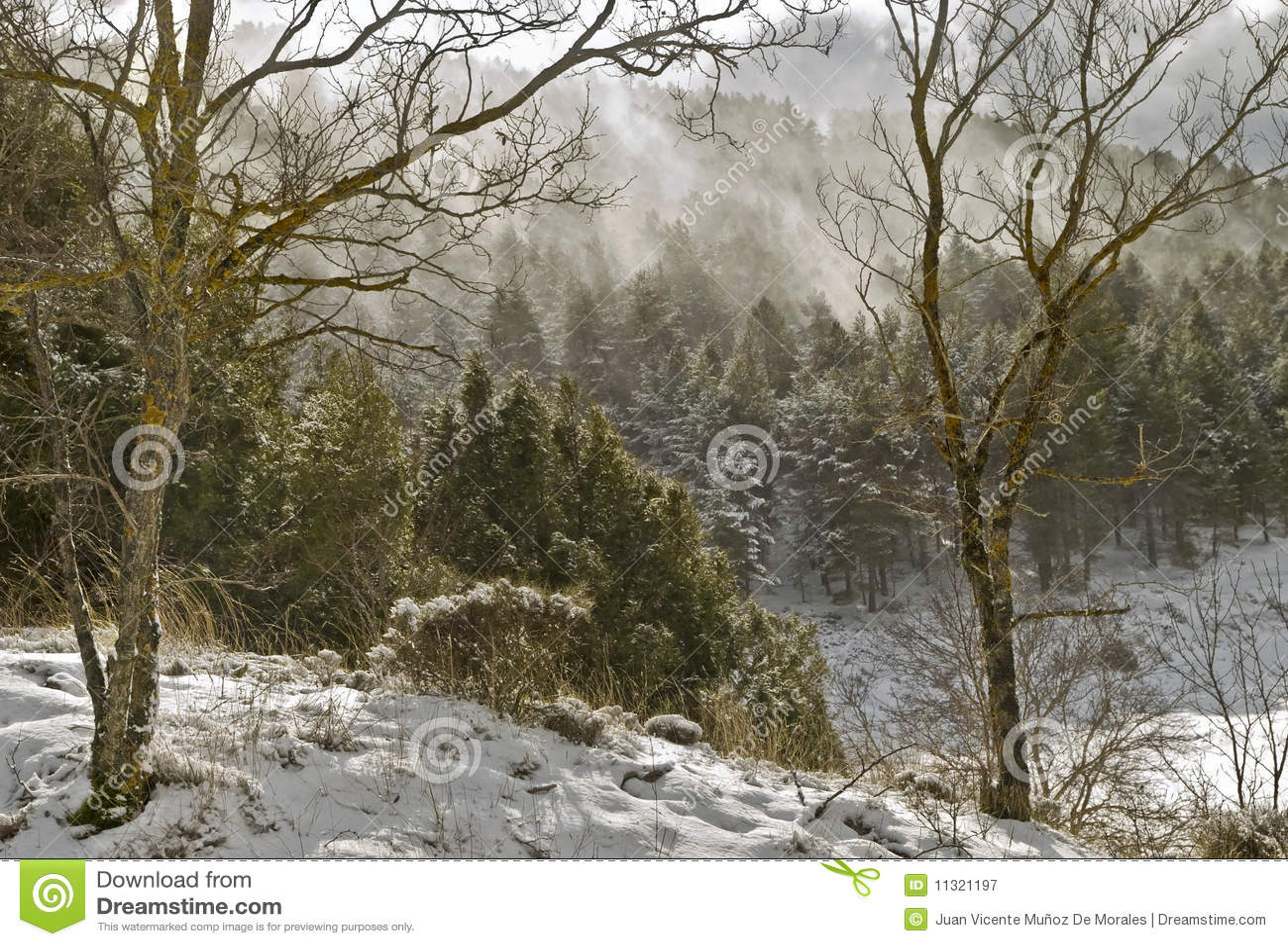 Windstorm im Wald