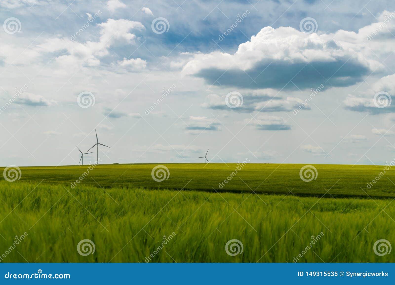 Windturbines op een groen tarwegebied dat worden gesitueerd