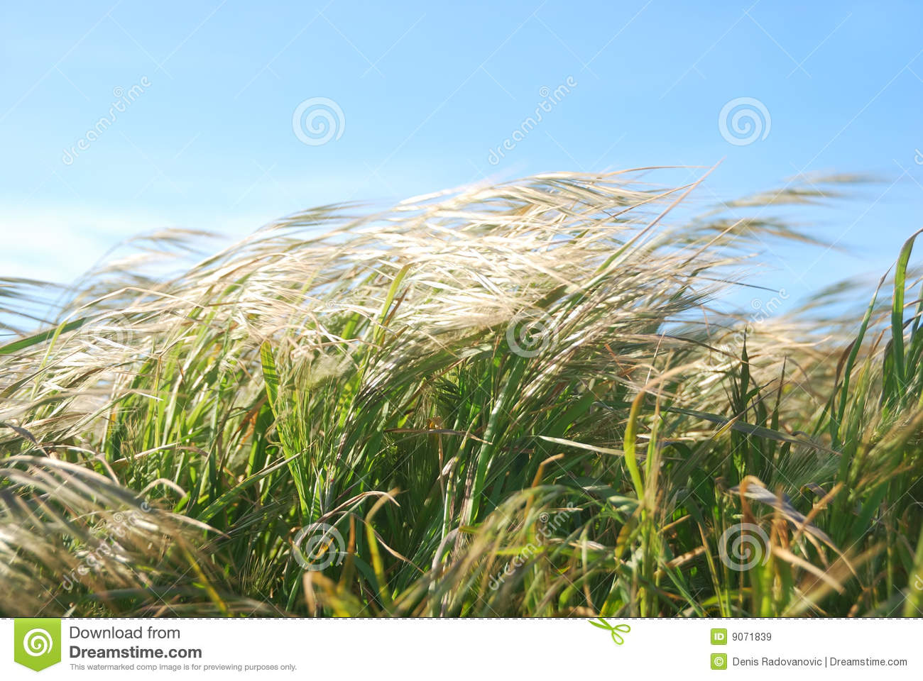 Royalty Free Stock Images Windy Day Grass Image9071839 on Windy Days Clipart