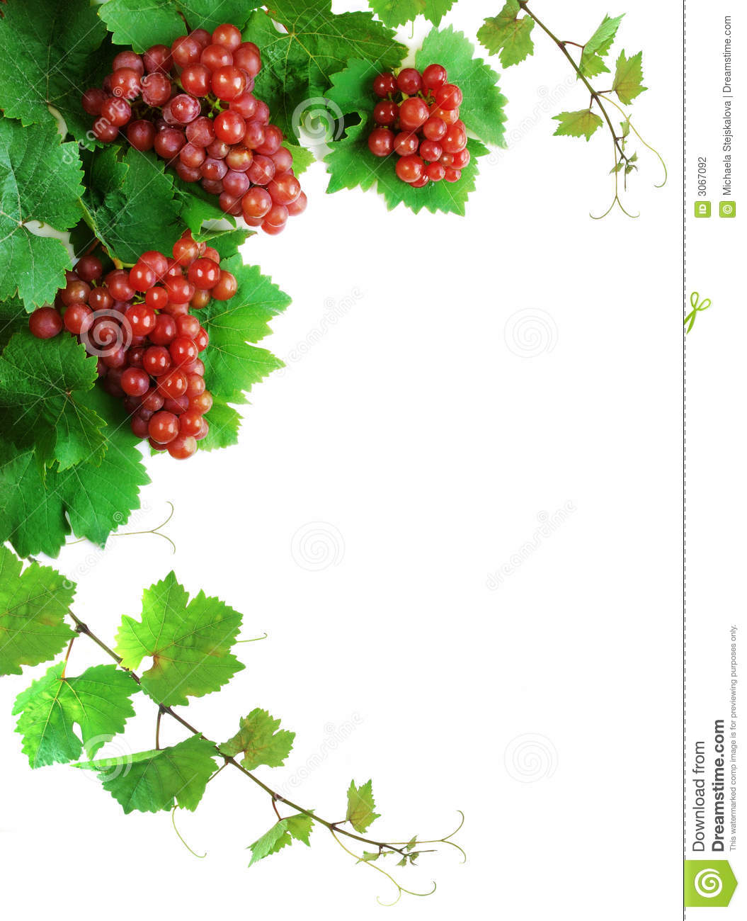 Wine Grapes Decoration Stock Photo Image Of Abstract 3067092
