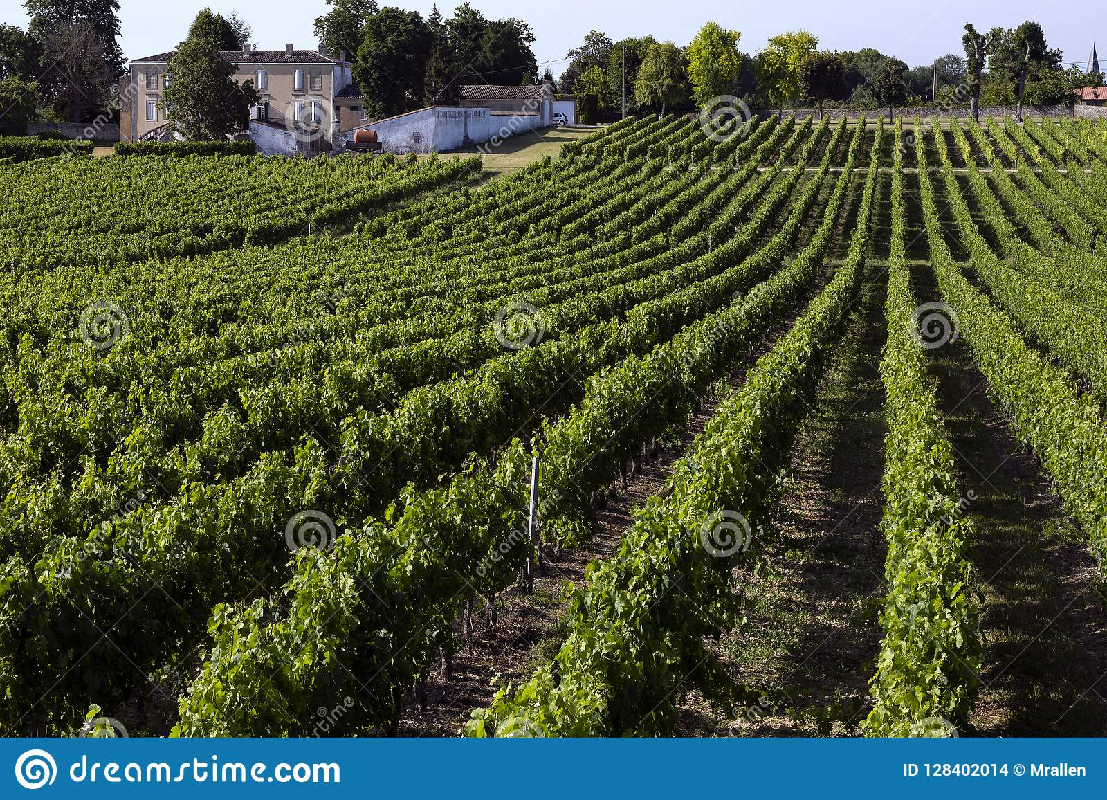 Wine Production - Vineyard - Dordogne - France