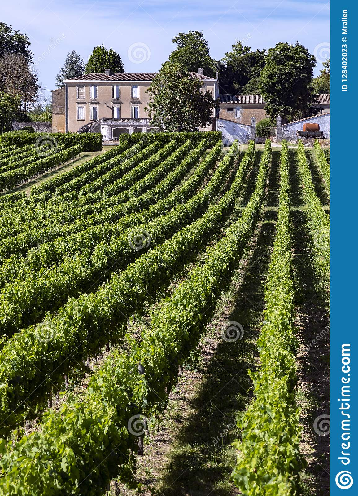 Wine Production - Vineyard in the Dordogne - France