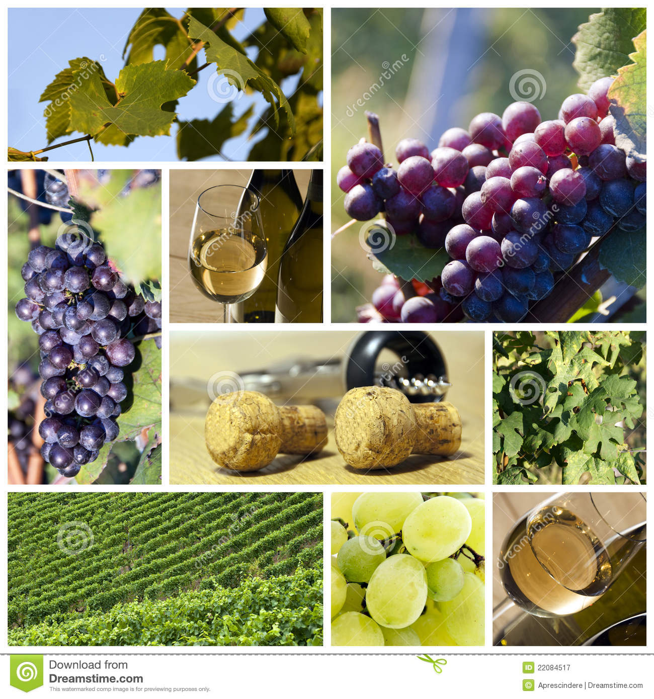 Wine and vineyard collage
