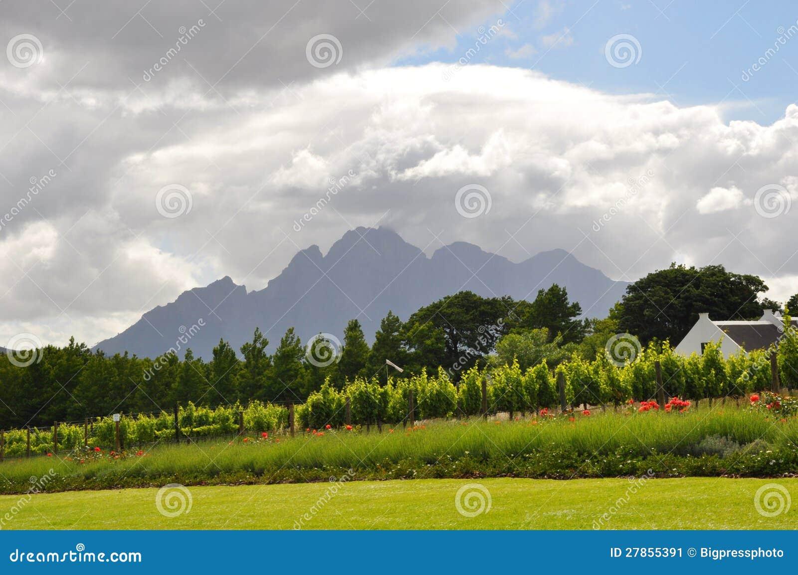Winelands Kapsztad Południowa Afryka