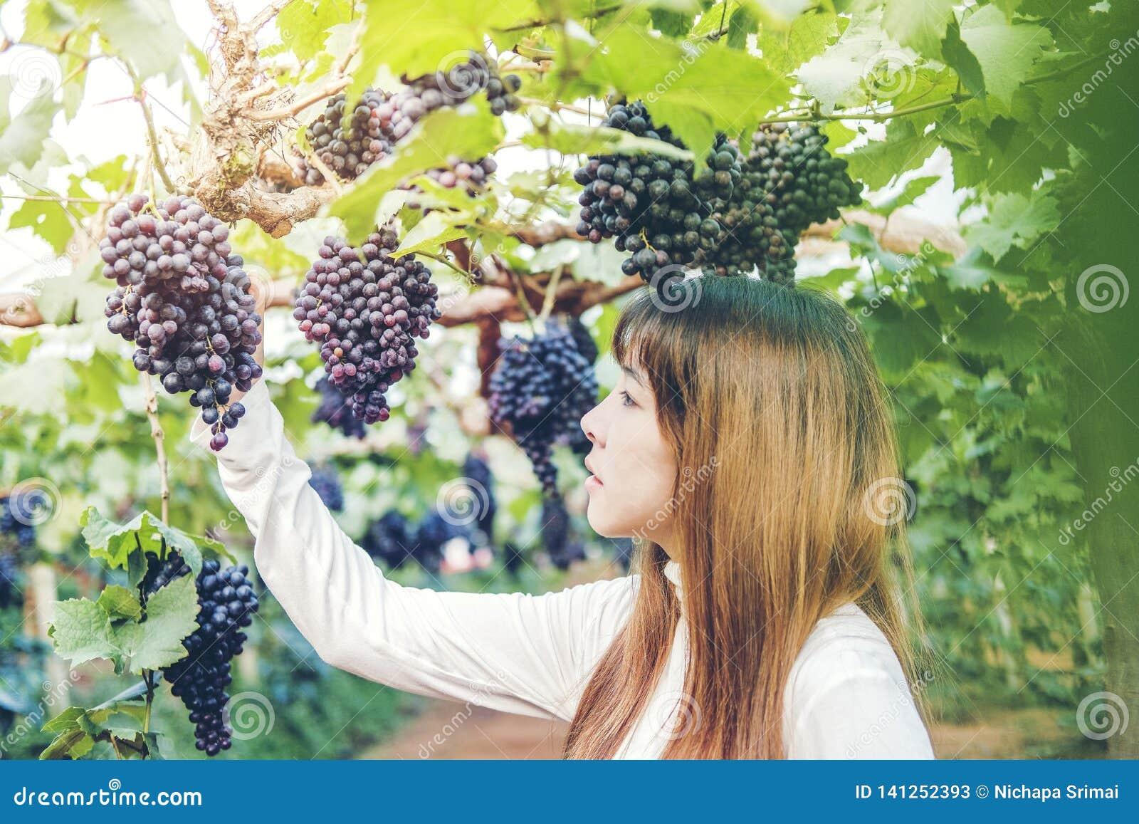 Winemaker asiático de la mujer que comprueba las uvas en viñedo