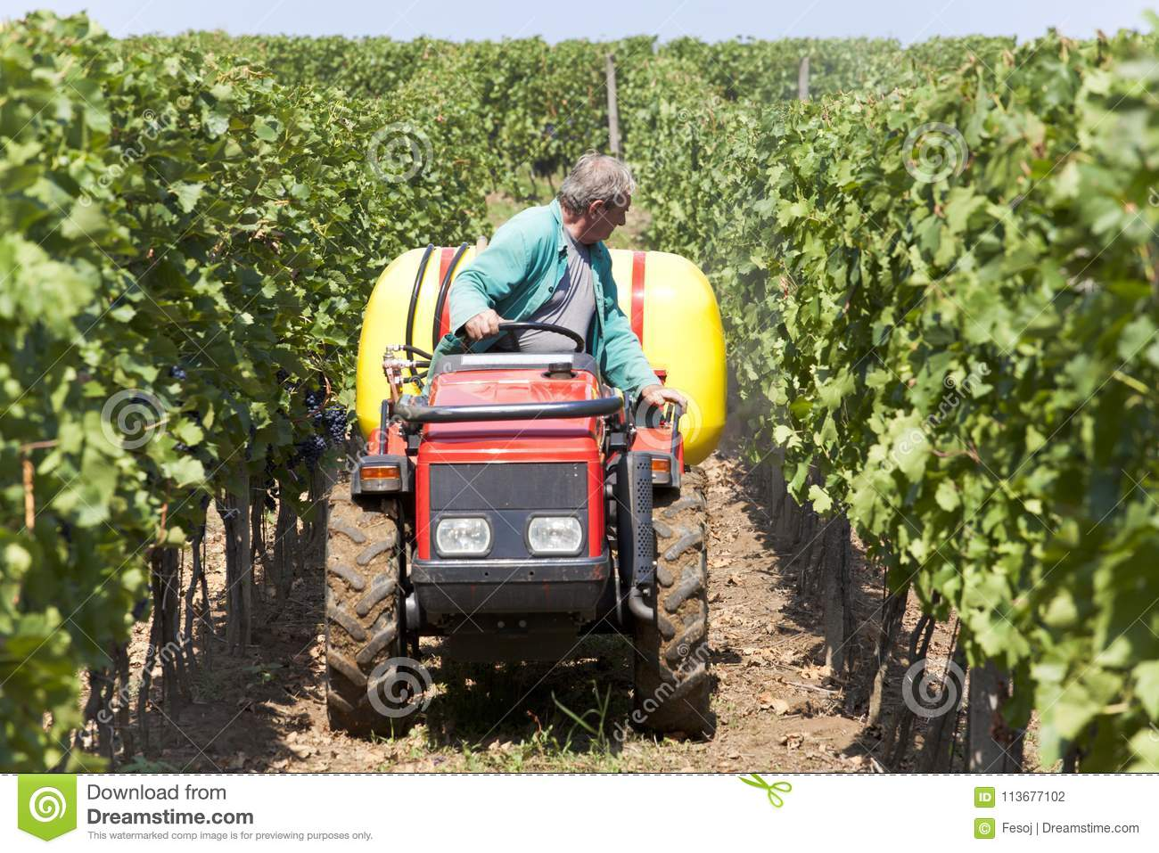 Small Agriculture Machinery Sprayer In Action In Vineyard Stock