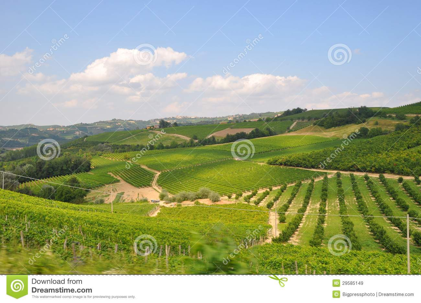 piemonte vineyards Barolo Langhe Alba italy