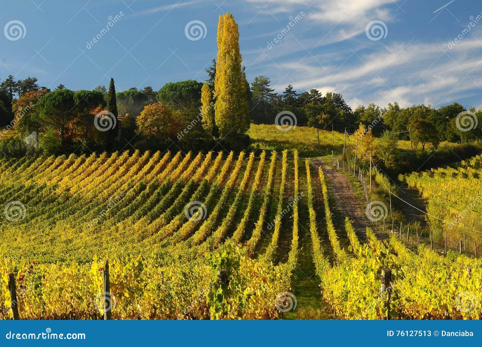 Wineyards在托斯卡纳, Chianti,意大利