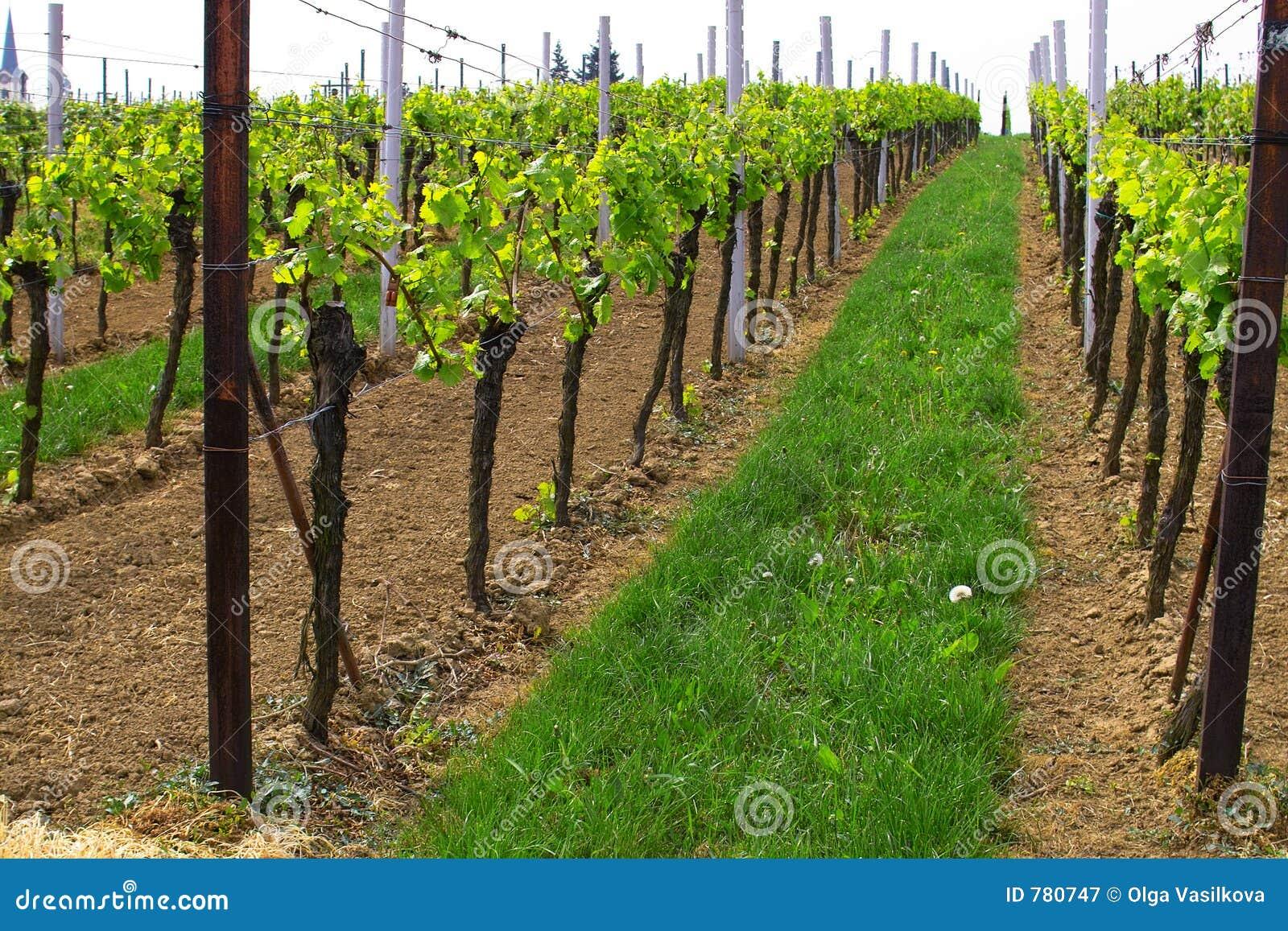 Wineyards en resorte