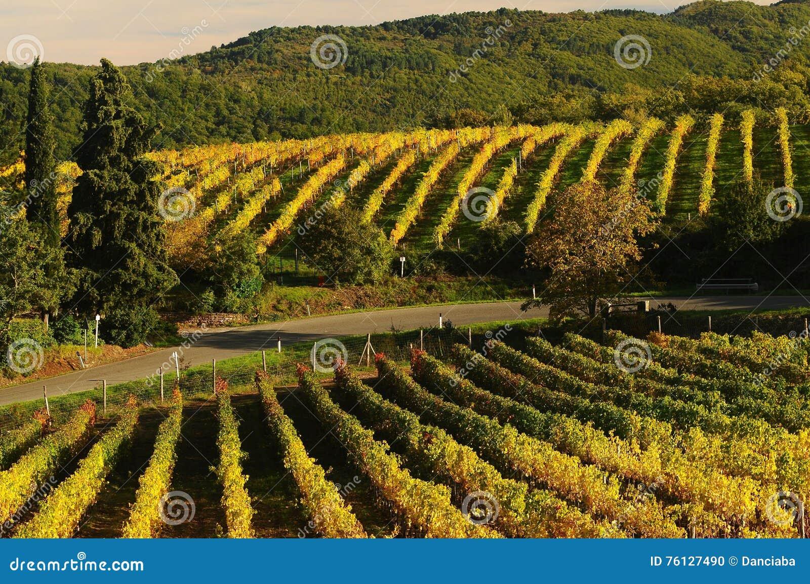 Wineyards i Tuscany, Chianti, Italien